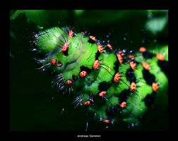 MACRO 'Caterpillar' by brAndkopf