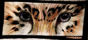 Leopards Eyes by WolffPupsSubmission