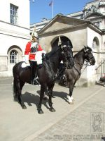 Household Cavalry by jollyjack