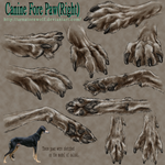 sketch - Canine Fore Paw by ArnaTornwolf