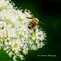 Just a little bee by Yoh-Boo