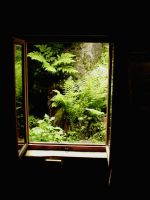 The Window of Nature by 2BblueBoy