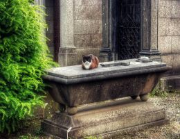 Cemetery cat by kakobrutus