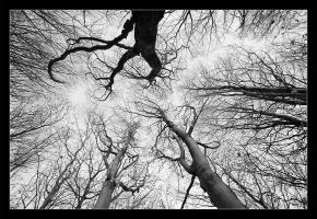 trees by moinerus