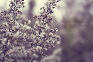 Periwinkle Dream by foxmulder9