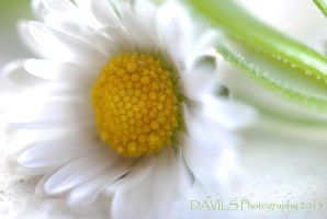 Solitaire by Davils-Photography