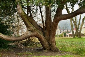 tree trunk 05 by NellyGrace3103