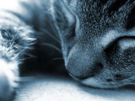 240 by cat-lovers