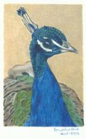 Beautiful Blue in colored pencils by Carryn