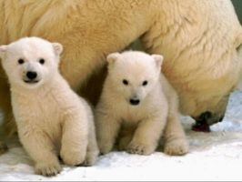 Polar Bear Cubs by Sonishka