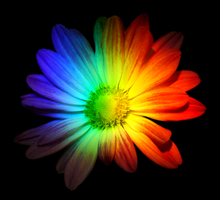 Rainbow Flower by SagetHollen