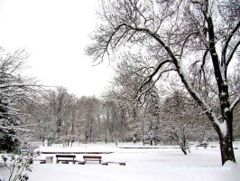 White Silence In The Park by Aivaseda