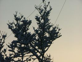 Snow covered branches by countevil