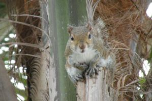 Squirrel in a Palm Tree by EllieZ