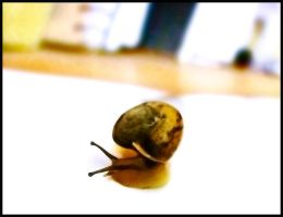 Snail by mobber