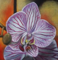 Orchid by AmazingStreetPaint