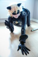 Chat Noir - indoors by CauldronOfMischief