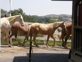 horses2 by JuneButterfly-stock