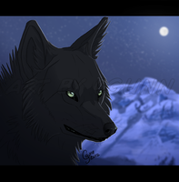 Cold Nights by InstantCoyote