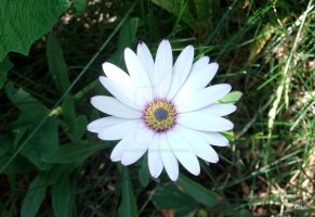 Daisy 2 by Neon-Tiger-7