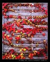 Signs of Fall 3 by vikingexposure