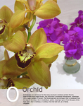 """O is for """"Orchidaceae"""" in Floral by Toash"""