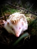 The Hedhehog Baby Saying Hello There  by eskile