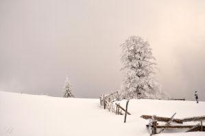 ...covered...in white by Lk-Photography