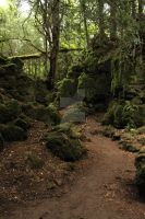 Puzzlewood 46 by Tasastock