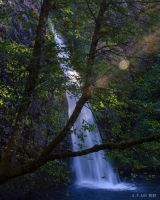 Late Afternoon at Horsetail Falls by AFL