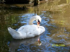 swan by kimmie456