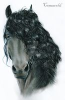Frisian by Comacold
