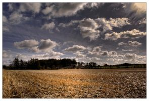 Corn field by mo2g