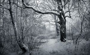 Winter Trees by Pajunen