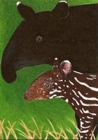 Day 24: Malayan Tapir ACEO by whitetippedwaves