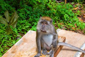 Monkey by Saher4ever