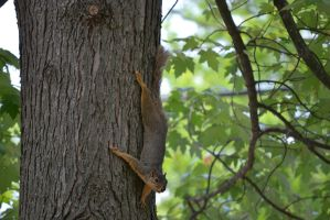 Squirrel 2 by CoyoteDove