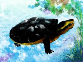 Turtle by Chris0919
