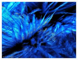 Feathered Rhapsody in Blue by Arawn-Photography