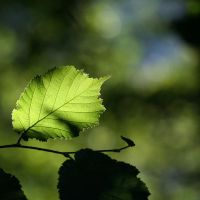 green leaf by mathias-erhart