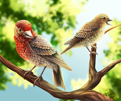 A Pair of Finches by r-20