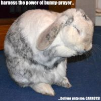 Bunny Prayer... by Kat-Nicholson
