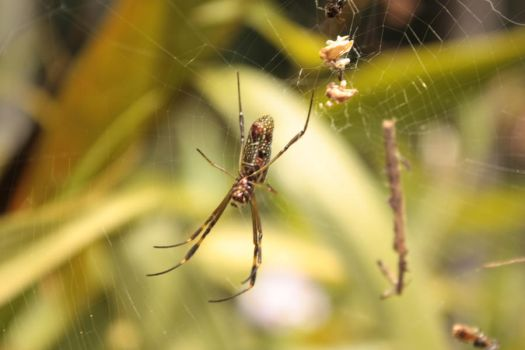 Spider and her net by keziakos