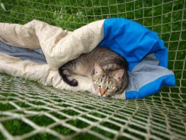 Tabby in a Hammock 2 by K1ku-Stock