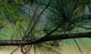 Garden Impressions, Pine Needles by MadGardens