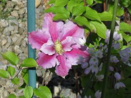 pink flower and aliums by KezXxX