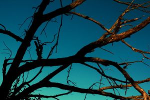 Branches at dusk by evanerichards