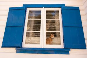 How Much is that Cat in the Window by FellowPhotographer