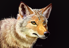 Coyote Head by Daguu