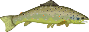 WIP Brown Trout by Tigershark06